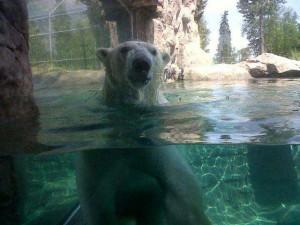Facebook photo from Cochrane Polar Bear Habitat