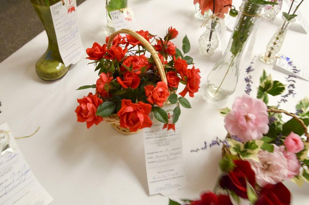 Beverly Morphet's roses are definitely first prize.