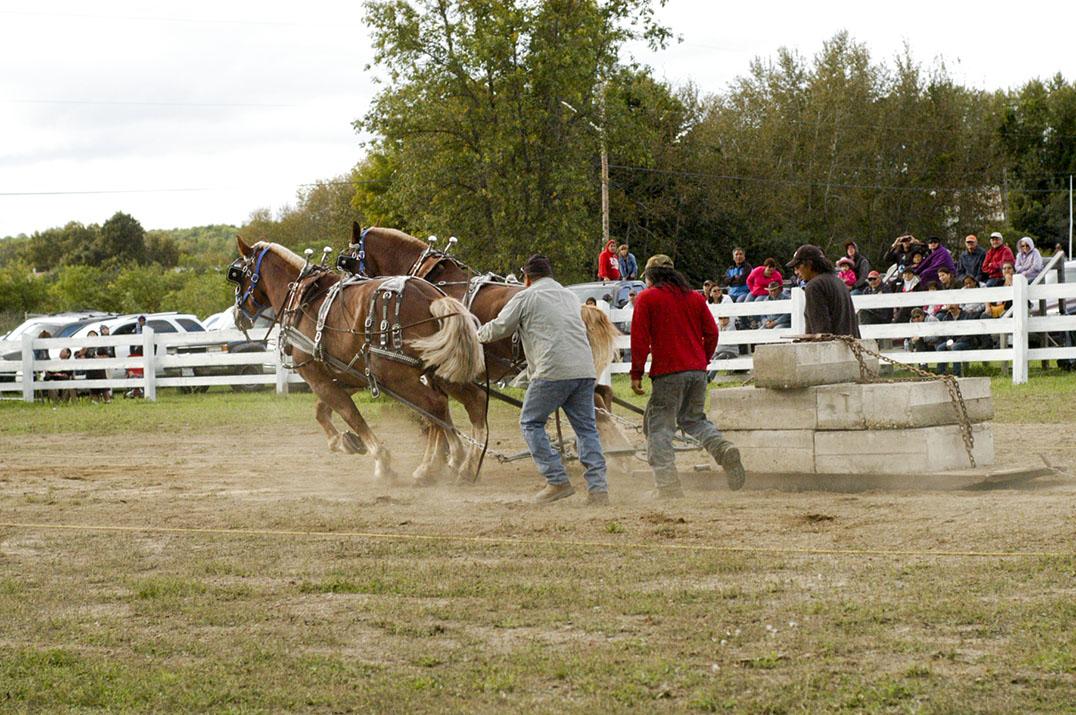 Fair Horse Pull