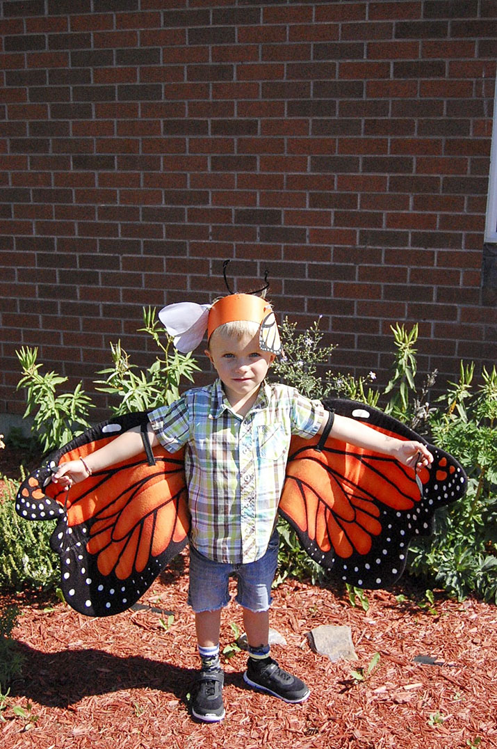 monarchs 7